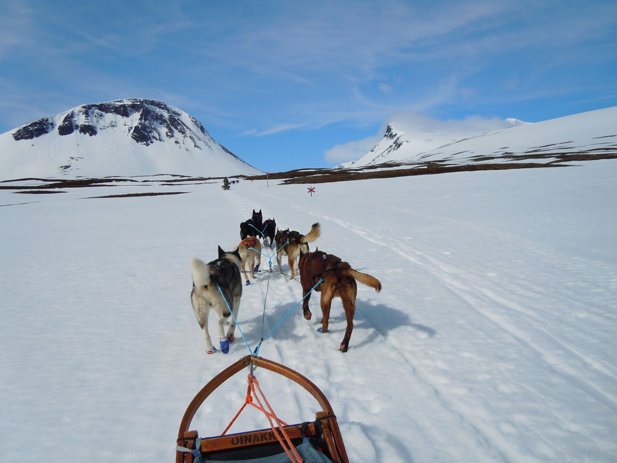 Huski(FOTO: Dietrich Bender) On Tour sind die Huskies voll in ihrem Element.es on Tour 3