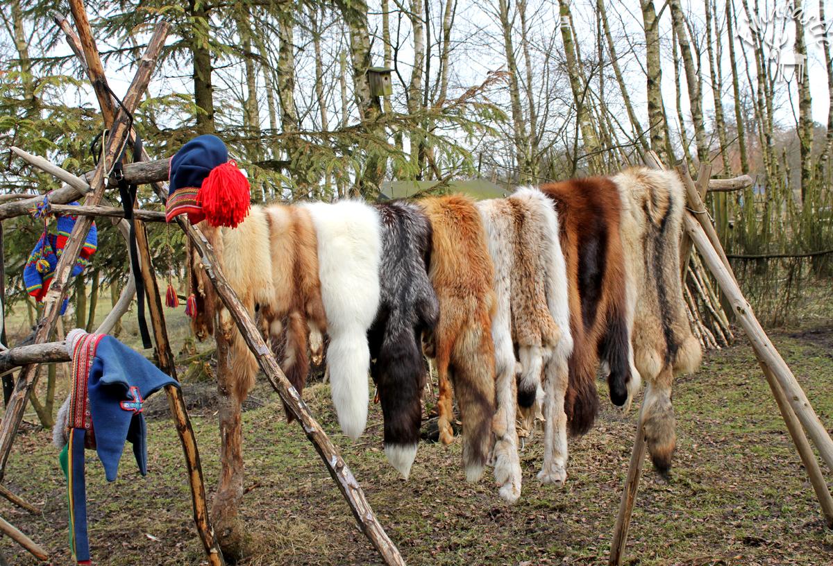 (FOTO: Finntastic) Uwe zeigt uns, wie unterschiedlich die Felle der tierischen Bewohner Lapplands sind.