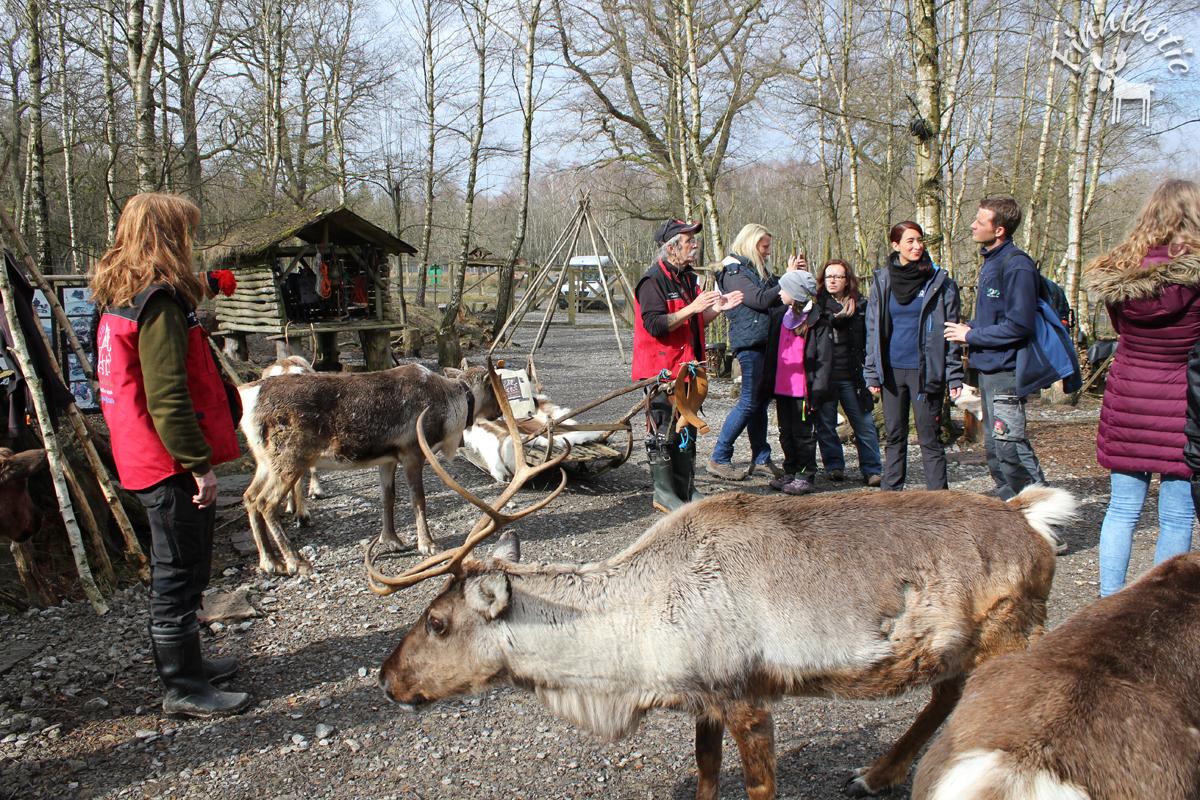 (FOTO: Finntastic) Bevor es auf Tour mit den Rentieren geht, bekommen wir von Uwe Unterricht im Rentier-Einmal-Eins.