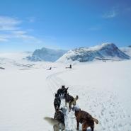 (FOTO: Dietrich Bender) Auf Tour mit dem Hundeschlitten durch die Winterlandschaft Skandinaviens.