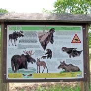 """(FOTO: Finntastic) Im Tierpark Sababurg erfährt der Besucher alles über den """"König des Waldes"""", den Elch."""
