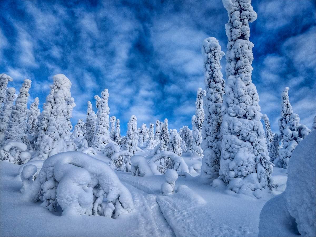 (FOTO: Anja Degiampietro) Im Winter liegt in Lappland noch ordentlich viel Schnee, ideal um Ski zu fahren oder eine gemütliche Fahrt mit dem Rentierschlitten zu unternehmen.
