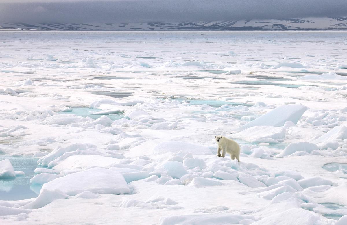 (FOTO: Heiner Kubn(FOTO: Heiner Kubny) Zusehen gibt es neben Schnee und Eis auch den König der Arktis, den Eisbären.y)