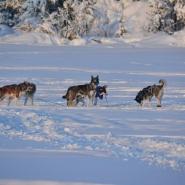 (FOTO: Liane Gruda) Kurze Verschnaufspause: Auch Huskys brauchen zwischendurch ein kleines Päuschen.