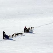 (FOTO: Liane Gruda) Unterwegs mit Schlttenhunden: Das Lenken eines Hundegespanns erfordert Konzentration und Geschicklichkeit.