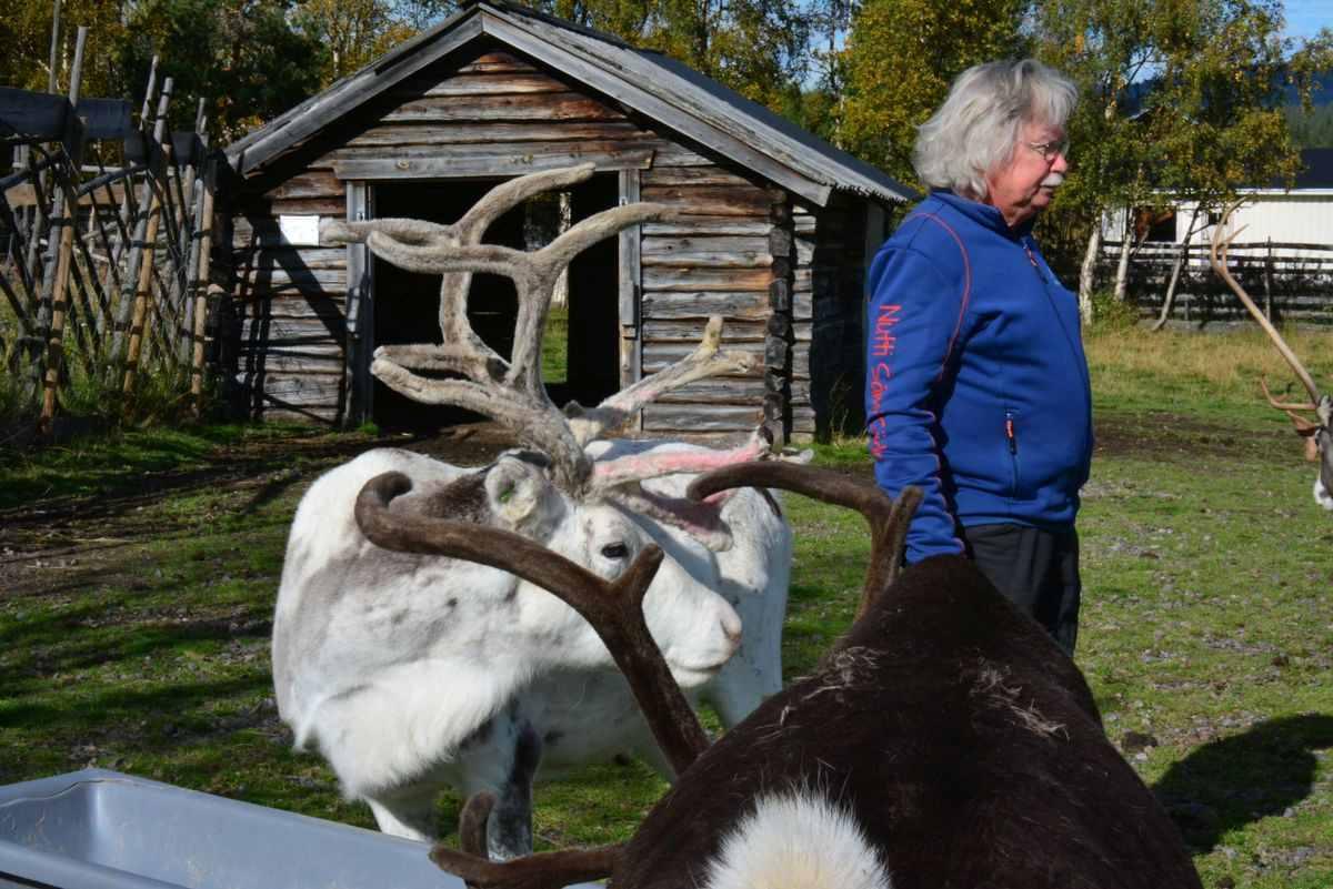 (FOTO: Liane Gruda) Hans-Joachim Gruda und seine Frau Liane helfen, wenn sie vor Ort in Jukkasjärvi sind, gerne bei der Rentierfütterung.
