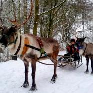 (FOTO: RENRAJD vualka) Uwe und Brigitte bieten im Winter Rentierschlittentouren durch den Rheinhardswald an.