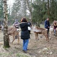 (FOTO: Finntastic) Auch wir dürfen die Hirsche des Nordens füttern.