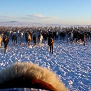 (FOTO: RENRAJD vualka) Die Sámi folgen stets ihrer Rentierherde, dabei setzen auch sie heutzutage auf moderne Technologie wie GPS und Motorschlitten.