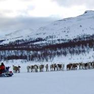 (FOTO: RENRAJDvualka) Noch heute folgen die Samen ihrer freilebenden Rentierherde auf ihren jährlichen Zugrouten.