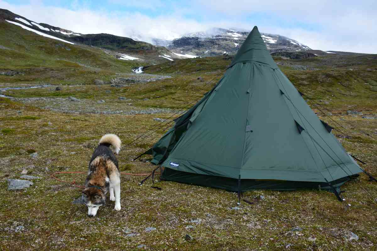 (FOTO: Liane Gruda)  Siberian Husky Čuobbu checkt den neuen Rastplatz im Tal Hoiganvaggi, Narvik-Gebirge, Sápmi.