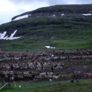 (FOTO: Liane Gruda) Markierung der Rentierkälber im Frühsommer in den Sommerweidegebieten des Saarivuoma Sameby oberhalb des Dividalen, auf der norwegischen Seite Sápmis.
