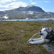 (FOTO: Liane Gruda)  Hannes und Siberian Husky Čuobbu im Tal Hoiganvaggi, Narvik-Gebirge, Sápmi.