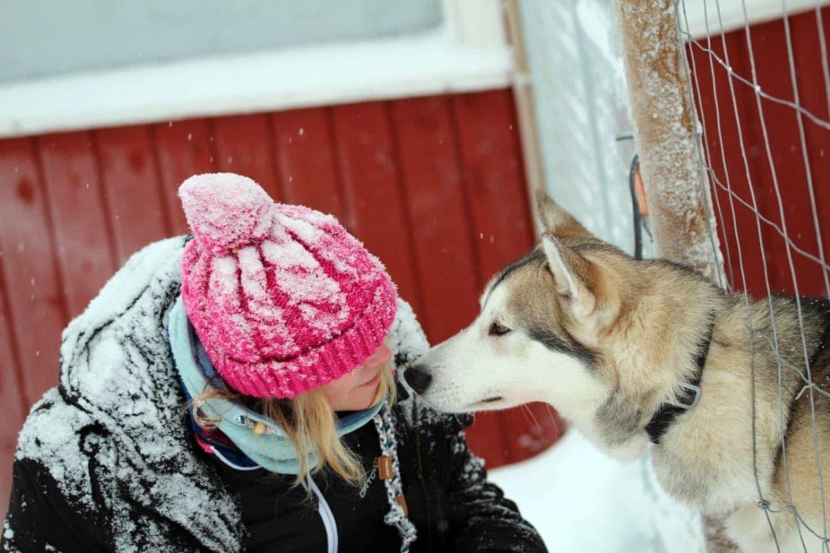 """(FOTO: Claudia-Alini) Der Besuch auf der Wolfshundefarm """"Susimaa"""" ein wenig außerhalb von Ranua war für ein Anja ein unvergessliches Erlebnis."""