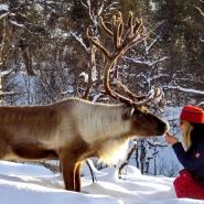 (FOTO: RENRAJD vualka) Brigitte und ein Rentier: Die Sámi haben eine enge Bindung zu ihren Tieren.