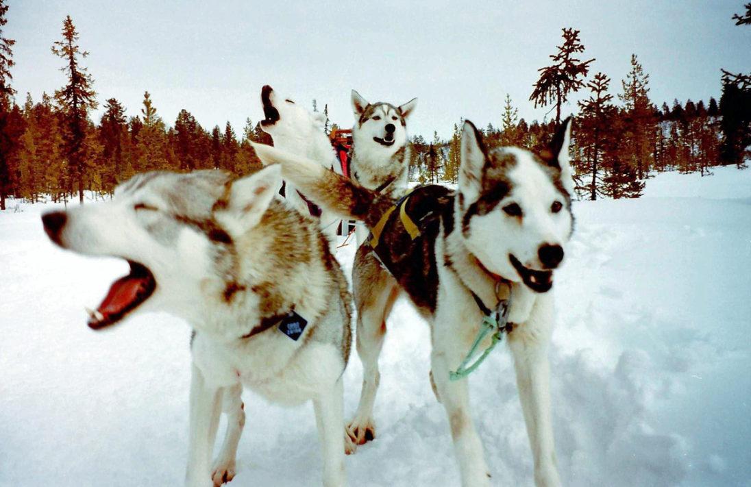 Huskies on Tour