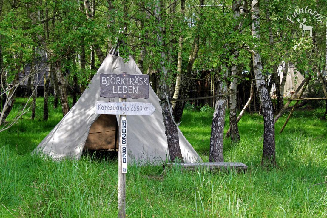 Lapplandlager_Bjoerktraesk_web