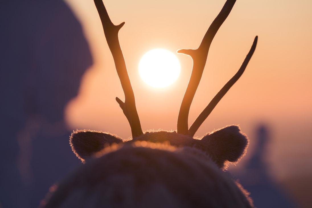 Ailo und die Sonne über Lappland