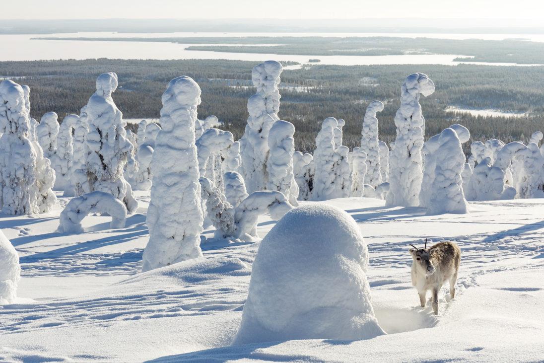 Ailo im Schnee