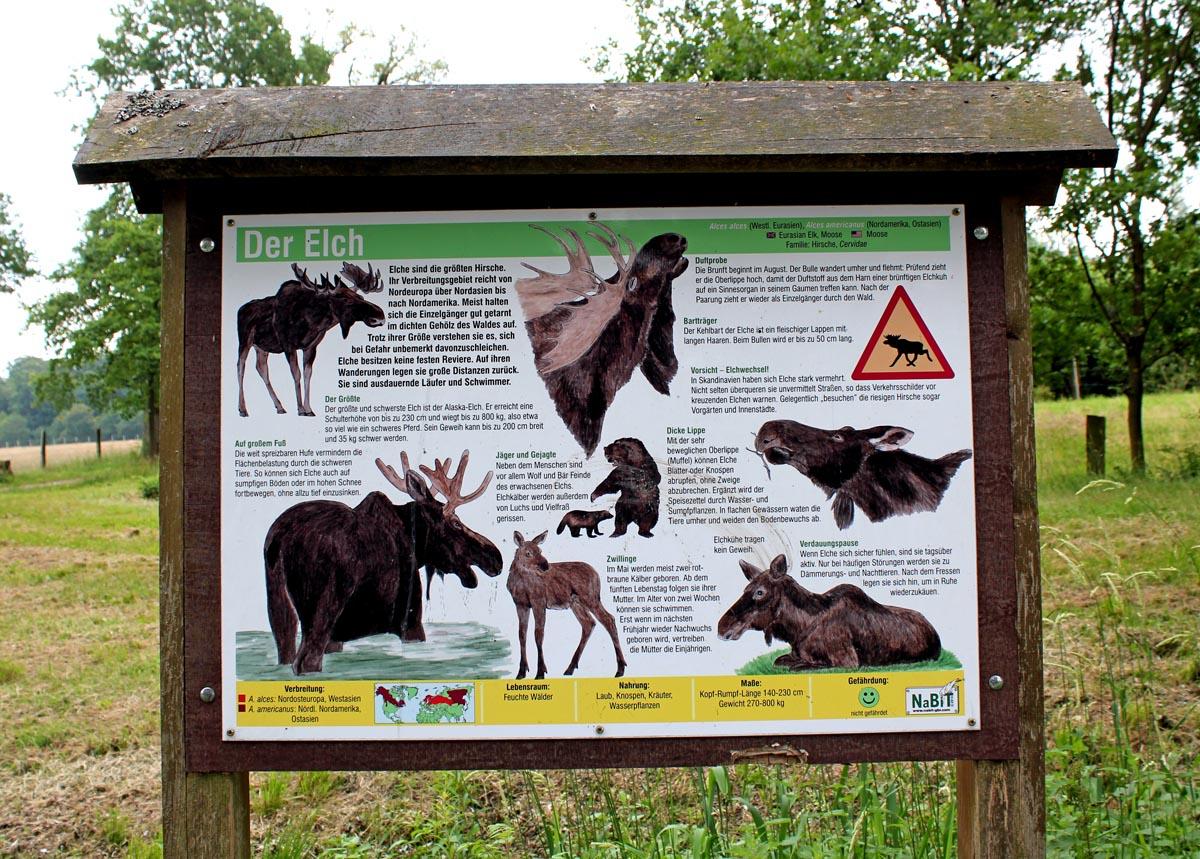 Der Elch Infotafel Tierpark Sababurg
