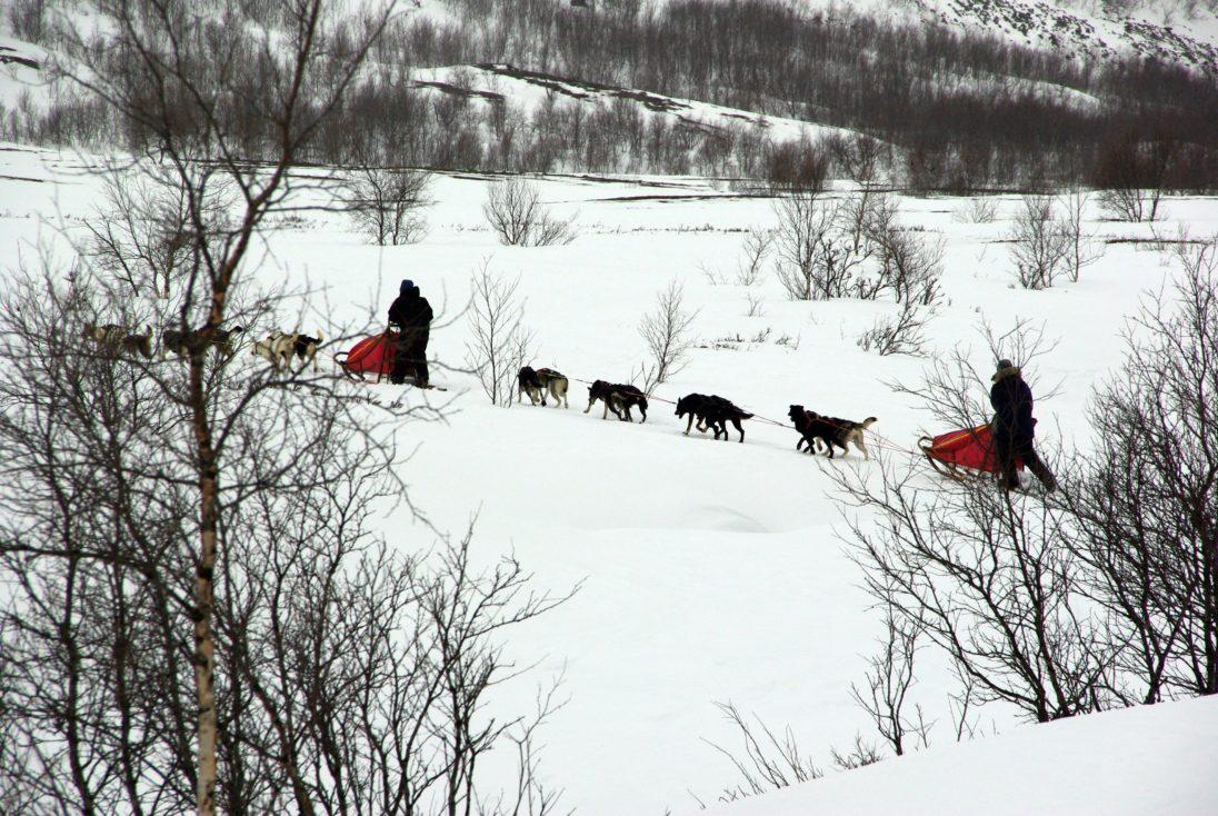 Schlittenhundegespann im Schnee