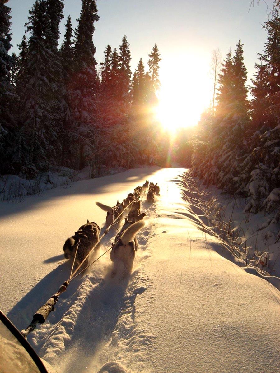 Huskys Schee und Sonnenuntergang
