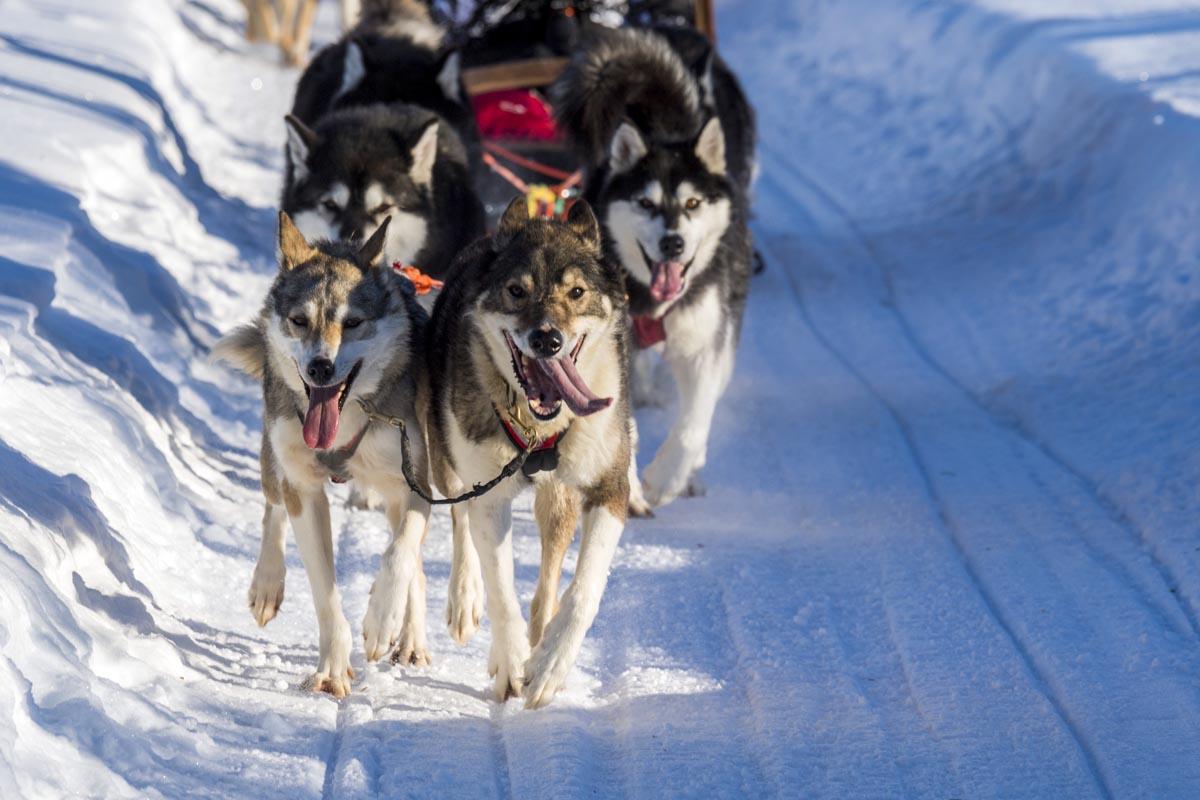 (FOTO: Klaus-Peter Kappest) Bei fintouring findet jeder die passende Finnlandreise.