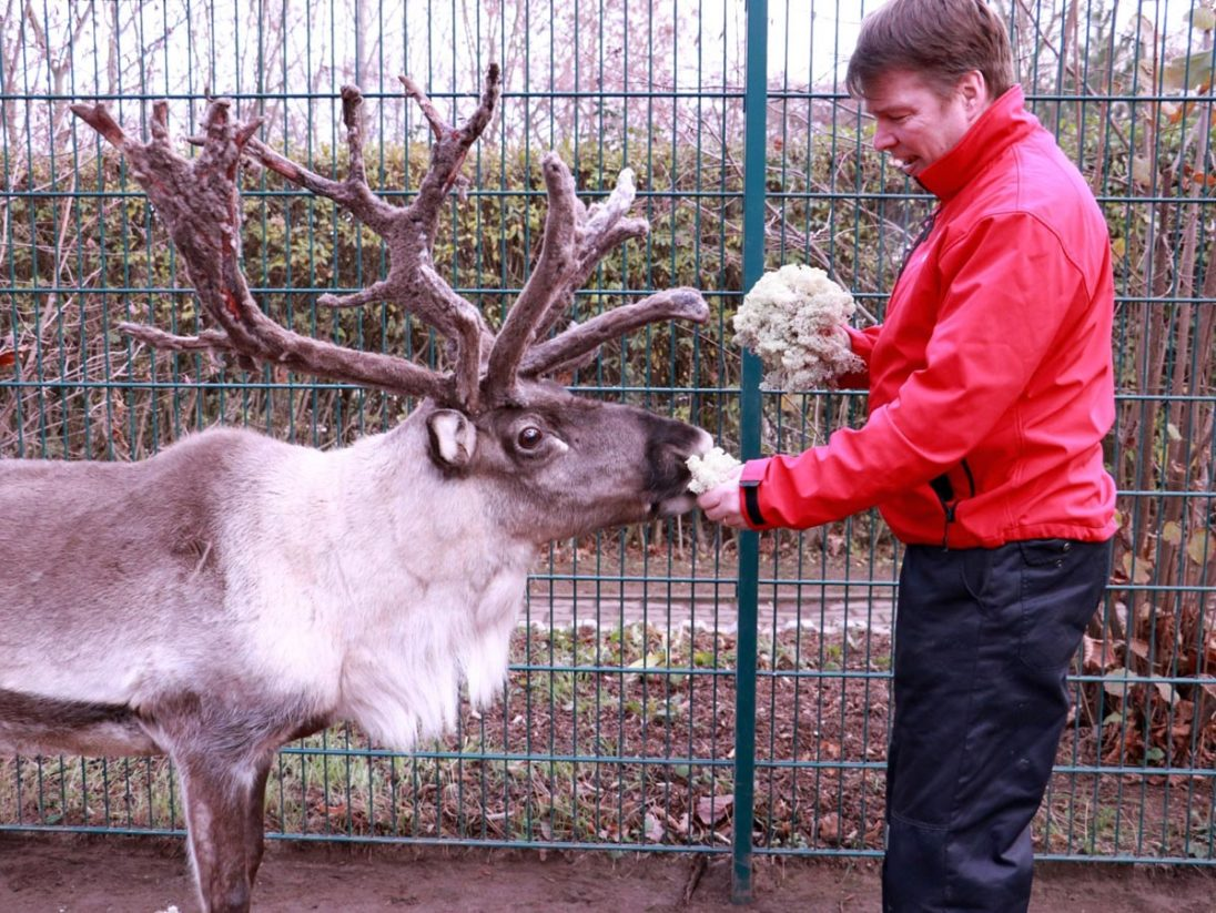 Pekka Paaso zu Besuch bei Rudi Rentier auf dem Goldberg